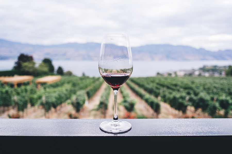 Glass of red wine with a background of a vineyard